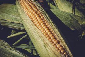 Как пользоваться картой Кукуруза от Евросети?
